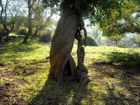 l'albero degli amici